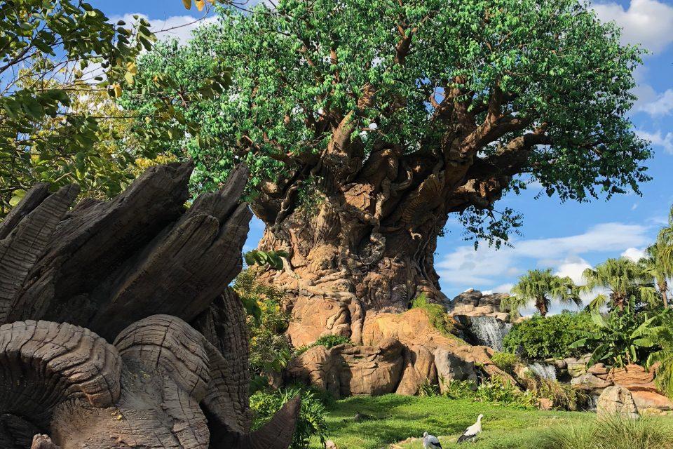 Storytelling in the Details: Disney's Animal Kingdom